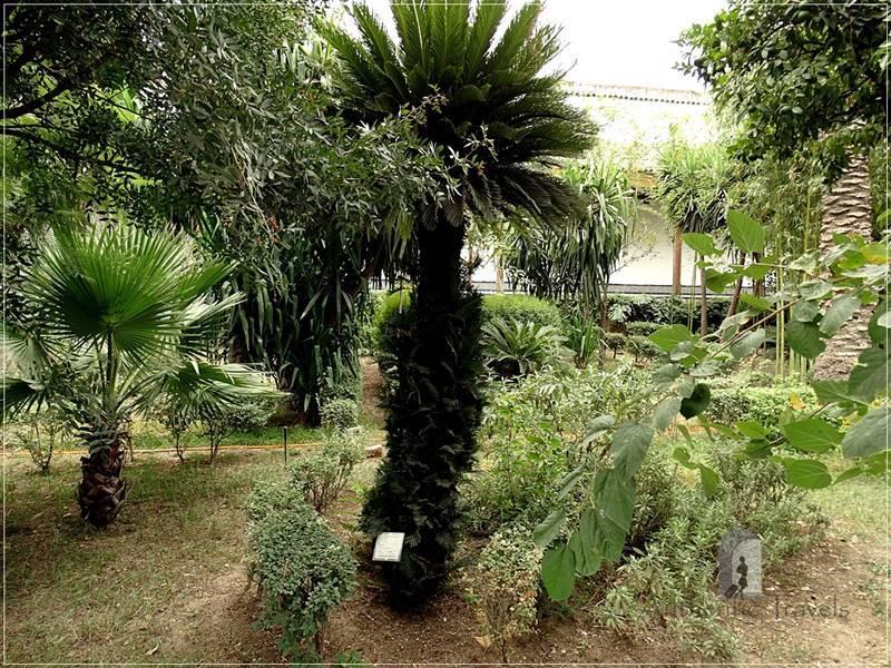 Fes: Dar Batha palace with Andalusian Garden (near the new medina)