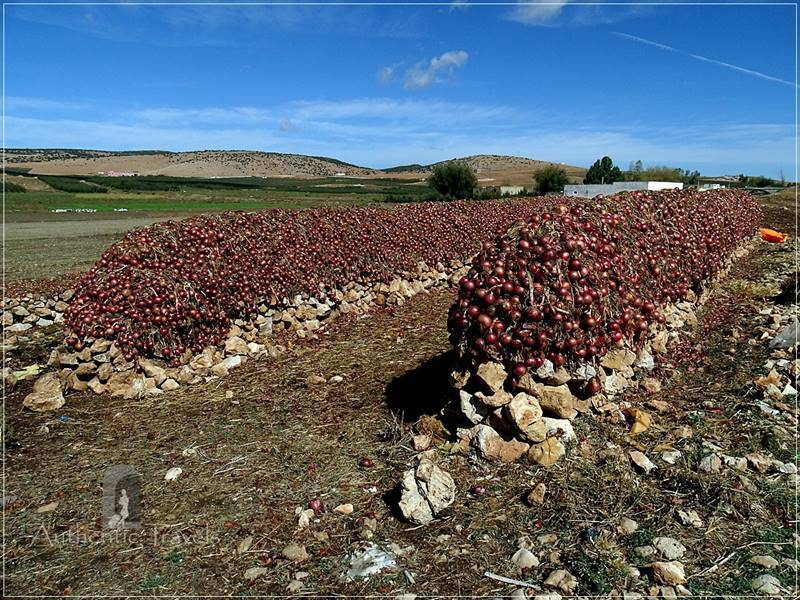 From Bhalil to Dayet Ifruah: onion production (this way it could be deposited for 6 months)