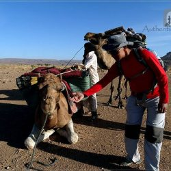 Camel Desert Trek - Day 2: my camel waiting for me to ride it