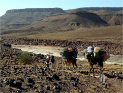 Camel Desert Trek - Day 2: our small caravan along the Ouad Mhasser Valley