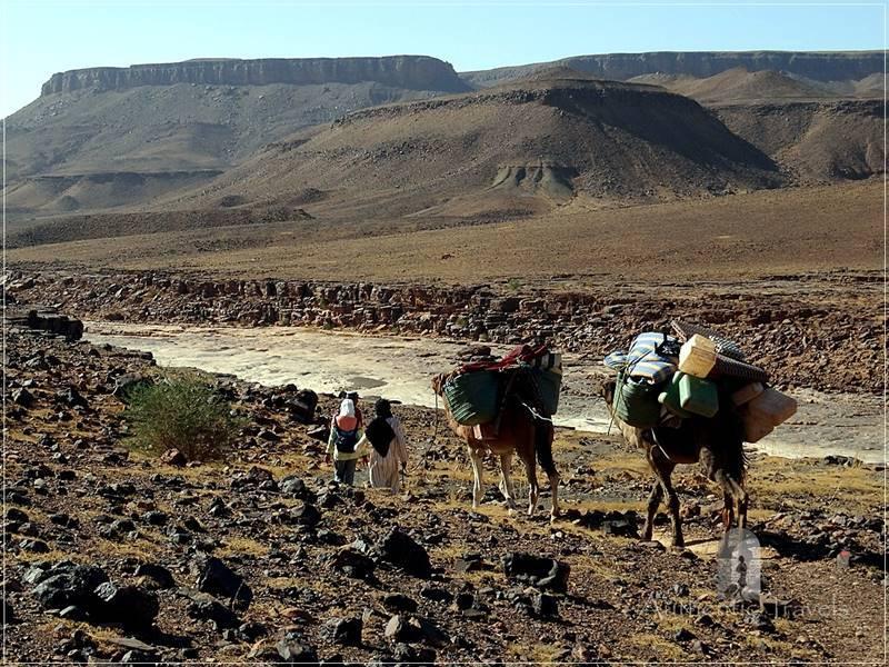 Camel Desert Trek - Day 2: our small caravan along the Ouad Mhasser Valley