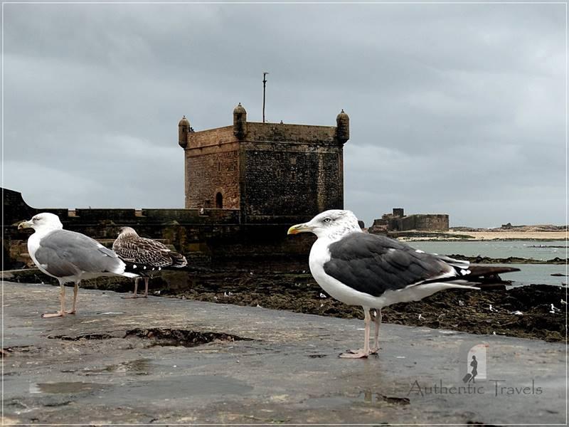 The old medina in Essaouira - seagulls near Skala du Port Bastion