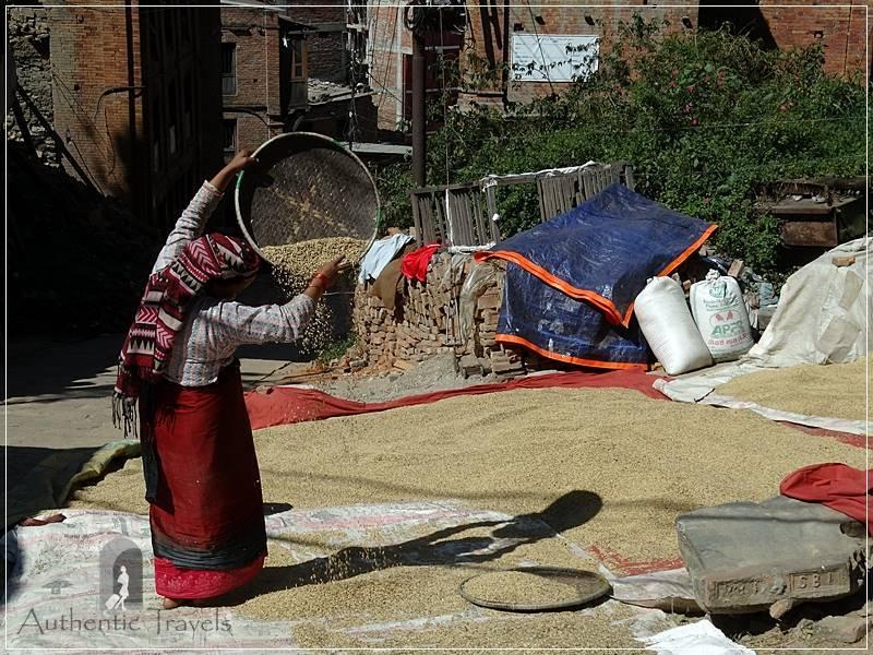 Kathmandu Valley: Bhaktapur - woman winnowing rice