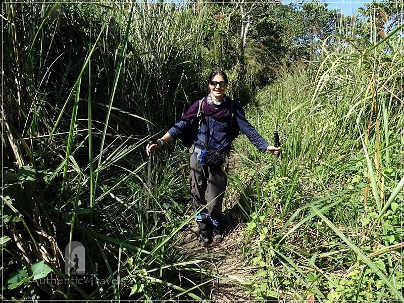 Chitwan - Sauraha: Jungle Walk - the grass was higher than me and I got 2 leeches on my left leg.