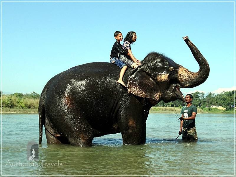 Chitwan - Sauraha: Elephant Bath along the Rapti River