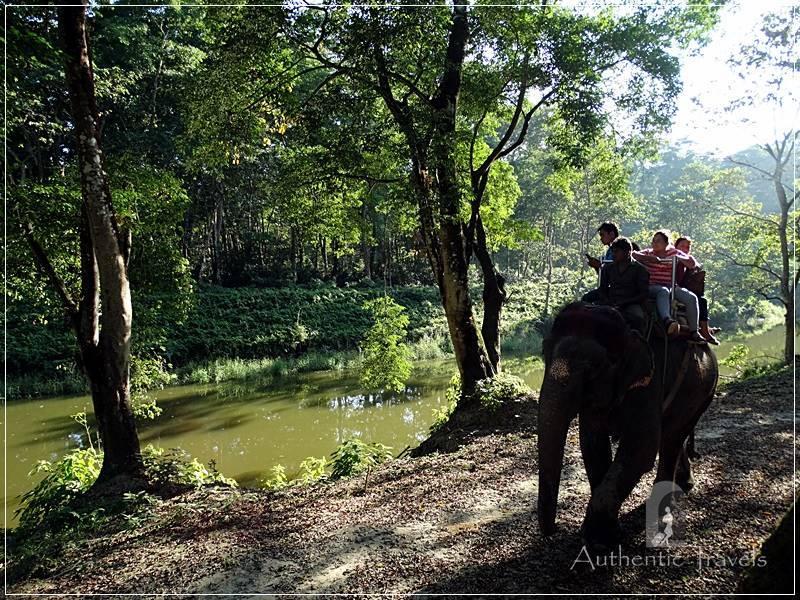 Chitwan - Sauraha: Elephant Ride through Baghmara Forest (the buffer zone of Chitwan National Park)
