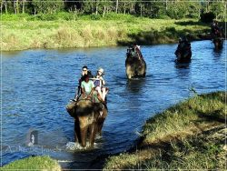 Chitwan - Sauraha: Elephant Ride through the Baghmara Forest - crossing the river (with crocodiles) while riding the elephants.