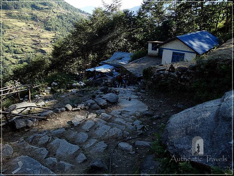 Ghorepani Trek: steep, constant, and big stone steps pave all the walkway up to Ulleri