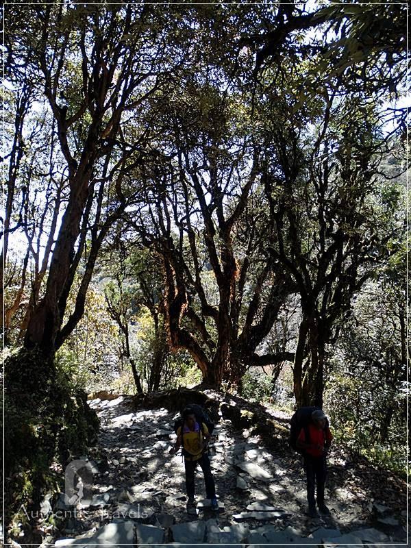 Ghorepani Trek: other stone steps from Nangge Thanti to Ghorepani