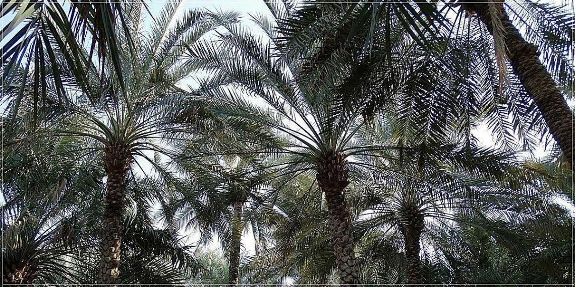 Al Ain Oases (crop)