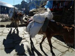 Deurali Pass - Ghorepani Trek