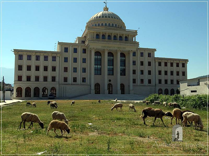 Berat New Town - sheep grazing in front of the University