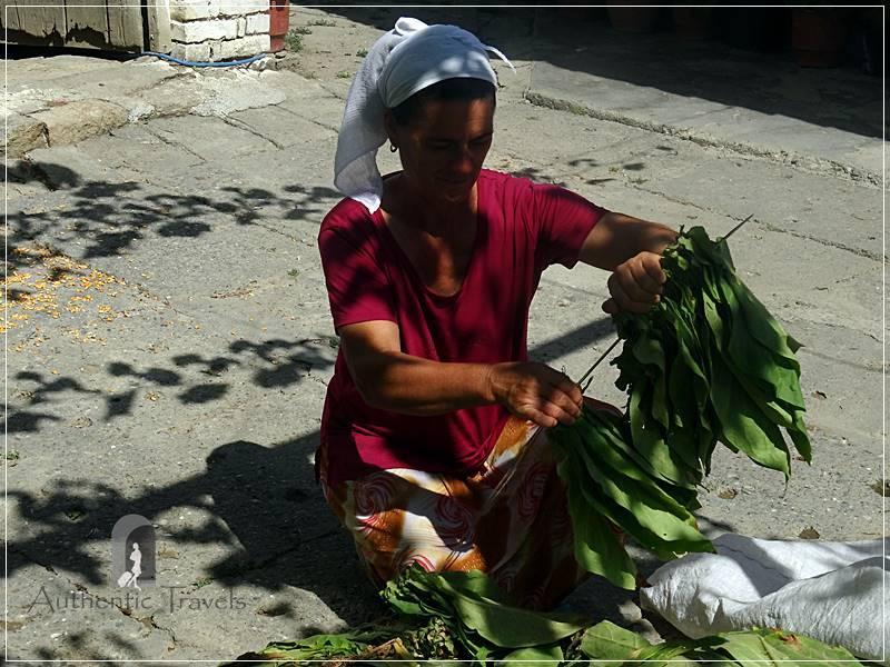 Camping Tirana - woman stringing up tobacco leaves